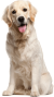 ryf:dog-png-file.png